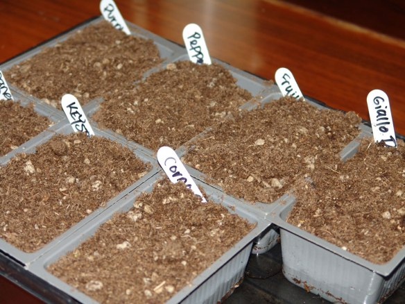 Starting Tomatoes and Peppers From Seed