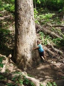 a-tree-hugger