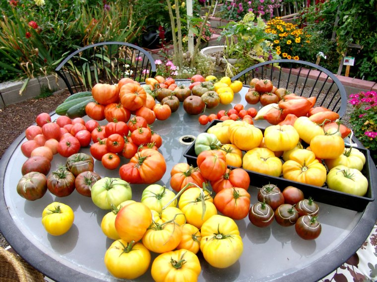 2014-table-of-tomatoes
