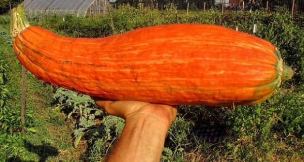 It may be just a humble squash, but it's also a symbol of First Nations' community and history, as well as a fascinating look into how amazing plants can be.