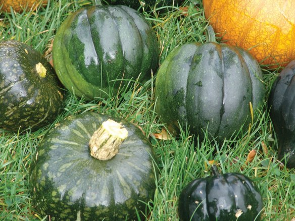 pumpkins-and-squash-2016---3.jpg