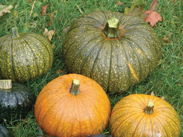 pumpkins-and-squash-2016---4.jpg