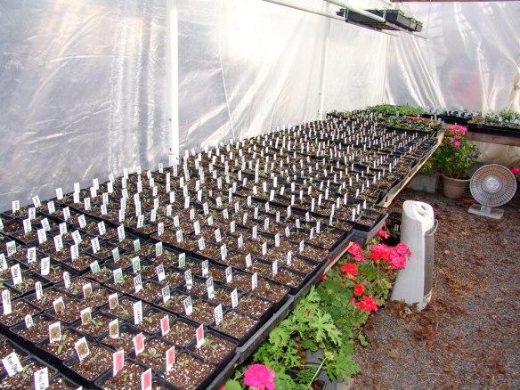 plant-babies-2-32418---25