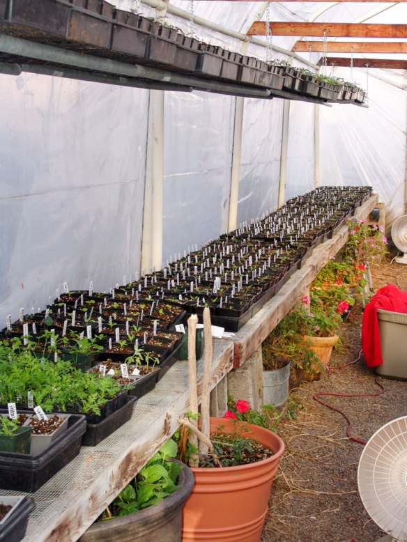 plant-babies-big-greenhouse-32418---25