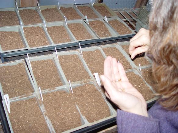 elizabeth_planting_4.JPG