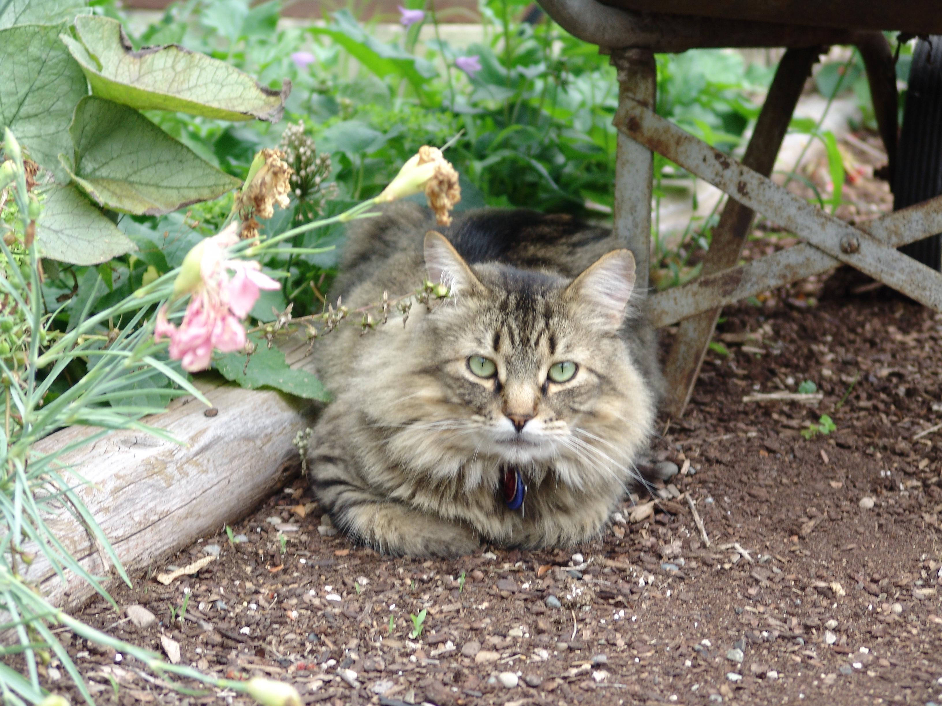 samson in garden