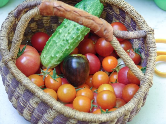 cherry-tomatoes---1