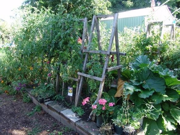 garden aug 22 - 1