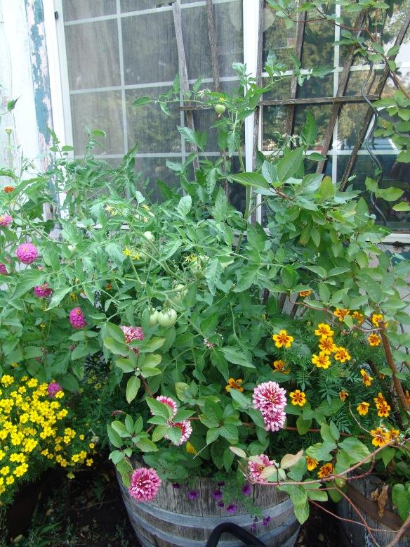 garden front big pots