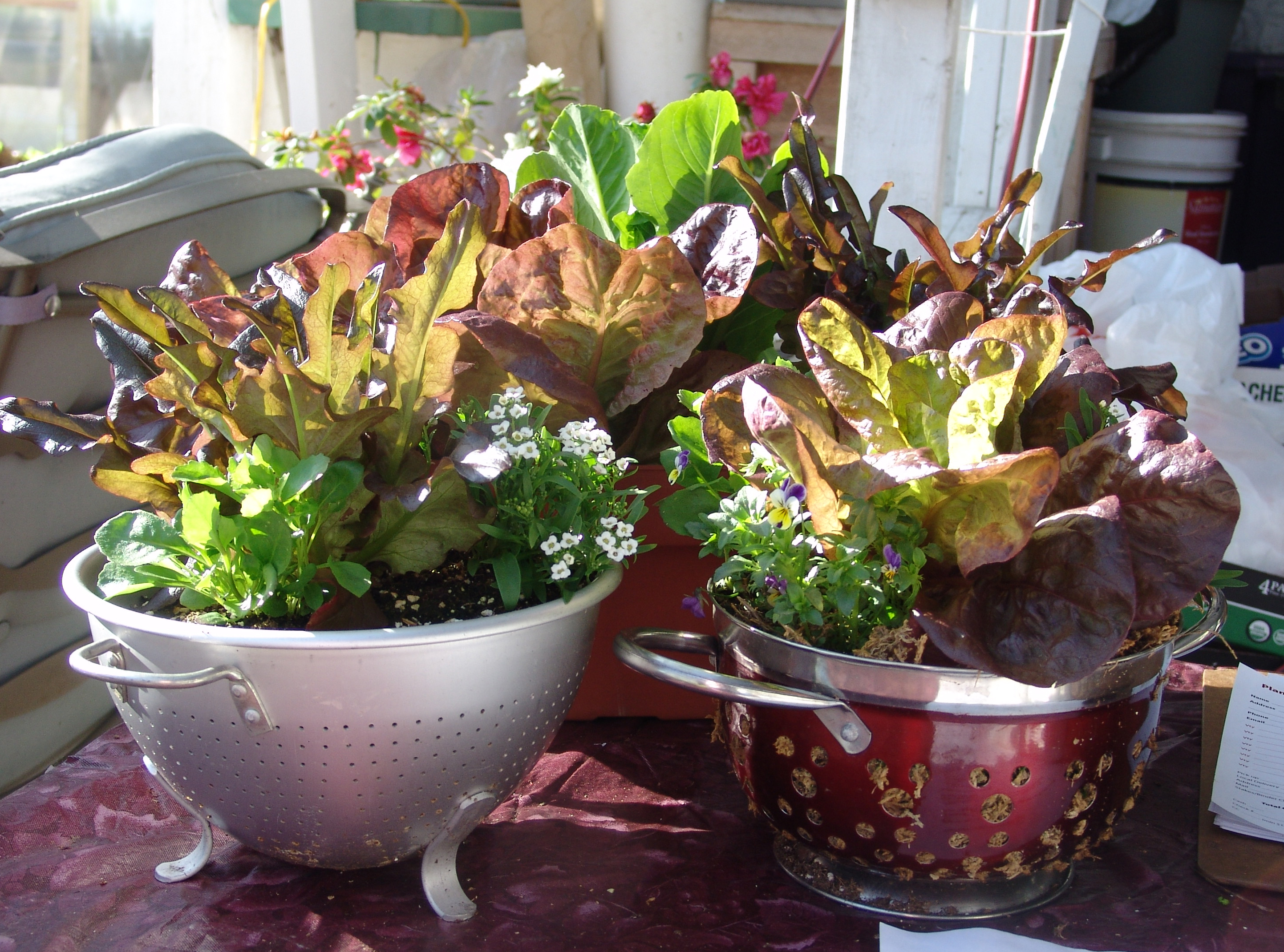 salad bowl pictures - 2