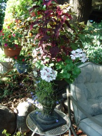 shade planting coleus and ivy geranium